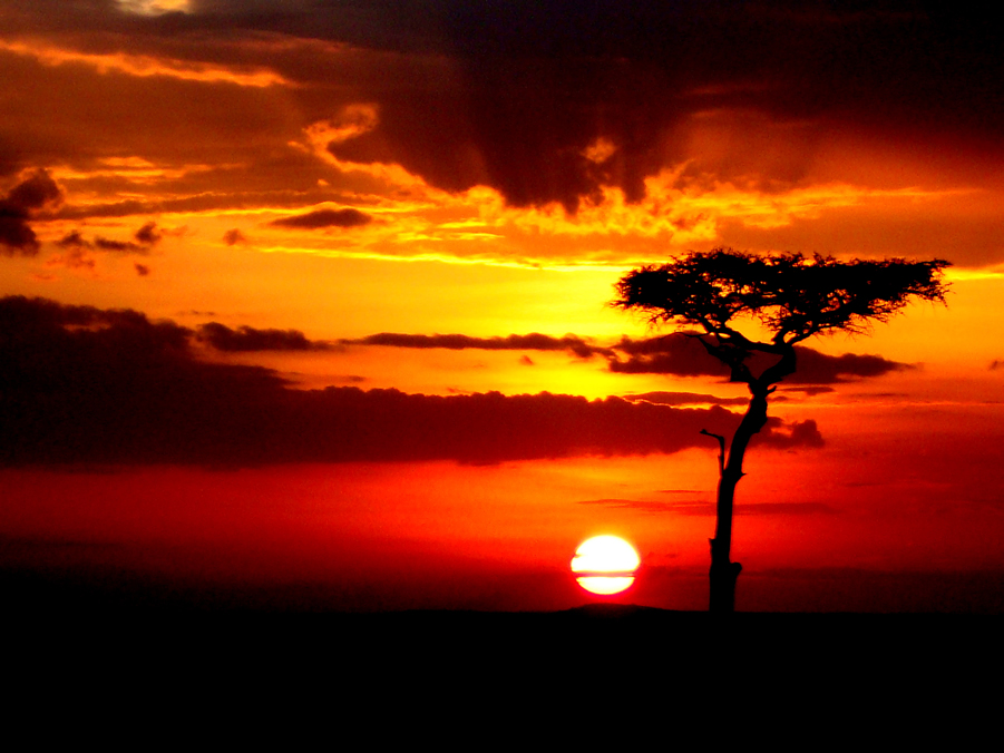 Savannah Sunrise