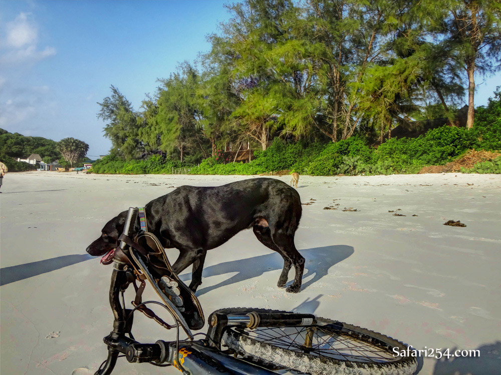 Watamu beach_bike and dog